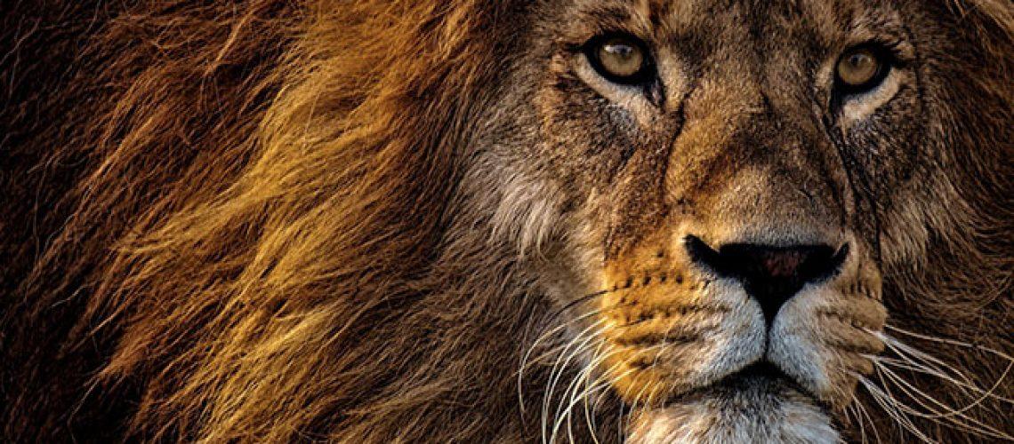 lion-stock-alerts
